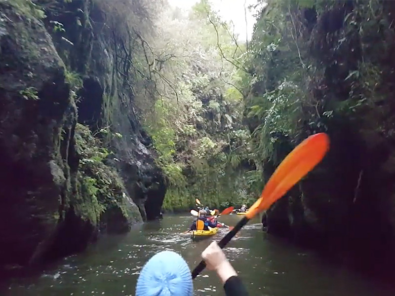 Kayaking with glow worms New Zealand tours